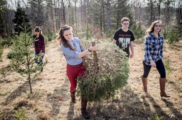 Christmas Tree & Family - Jackietara blog