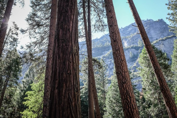 Yosemite + San Fran-15